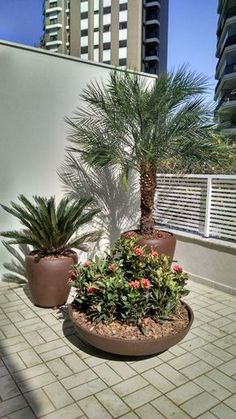 62 Ideas Rooftop Patio Design Plants For 2019 Terrace Garden, Garden Pots, Small Gardens, Outdoor Gardens, Patio Design, Garden Design, Tropical Patio, Pot Jardin, Front Yard Landscaping