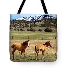Buckskin Quarter Horse Colts