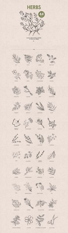 Herbs, Spices, Nuts. Hand drawn set