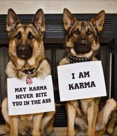 I really want to get a German Shepherd now and call her Karma. Haha.