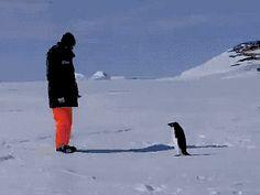Penguin being a Jerk