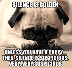 They're cute and adorable. They're also funny! We've pulled together some funny bulldog videos and memes for you to put a smile on your face. Just a shame a bulldog never really smiles! Funny Dog Memes, Funny Dogs, Funny Animals, Cute Pugs, Cute Puppies, Dogs And Puppies, Doggies, Happy Birthday Pug, Birthday Greetings