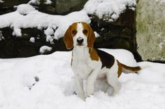 Charlie in the snow :)
