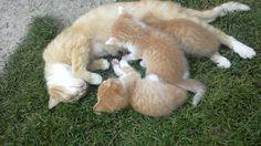 garfiš a koťata 2015