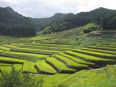 Rice Terraces - China