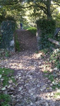 Entrance to Ardmore cliff walks. Cliff, Wonderful Places, Walks, Entrance, Ireland, Irish, Explore, World, Outdoor Decor