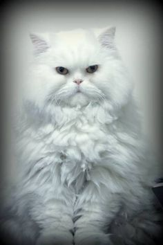 Her Function Is To Pretty Cats Beautiful Cats Crazy Cats