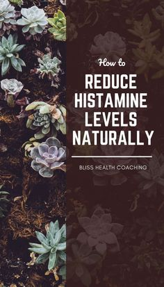 If you have allergies, it can be helpful to lower histamine levels naturally in the body. Find out gentle ways you can reduce histamine so you can reduce allergies. Health How to Reduce Histamine Allergies Naturally Gut Health, Health Tips, Health And Wellness, Holistic Wellness, Heart Health, Holistic Healing, Low Histamine Foods, Natural Antihistamine, Mast Cell Activation Syndrome