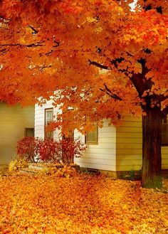 Fall is approaching. Are you ready? Here's a beautiful photo to help!