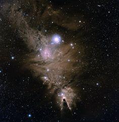 NGC 2264: The Christmas Tree Cluster