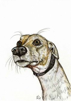 """""""Infinity"""" Greyhound Art print by Elle J Wilson on Etsy.  Captures the Grey expression perfectly."""