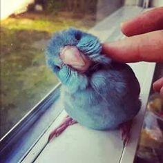 Blue cute bird :3   By Creative ideas (fb)