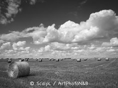 Centre-Val-de-Loire_11 © ScalpL / Art' Photo N&B Série sur : www.artphotonb.com Tirage photo noir et blanc argentique sur papier baryté d'un original numérique couleur. #tiragephoto #tiragenoiretblanc #noiretblanc #argentique #tirage #photo #noir #blanc #papierbaryte #fiber #fiberpaper #artphotonb #blackandwhite #bw #bnw #monochrome #photonoiretblanc #photographienoiretblanc #blackandwhitephotography #bnwphotography #argentik #analogue #analogic #analogicphoto #france #centre #eureetloir
