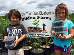 DiMeo Farms teaches kids to eat healthy with the best tasting blueberries and bearing-size $10 blueberry plants direct from real blueberry farmers (609) 561-5905 to grow your own berries at home.