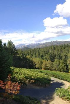 Napa Valley Deer Park. Photographer: Meghan Lamb. #napavalley #winecountry