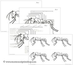 Free Parts of a Turkey 3-Part Cards and Definitions from