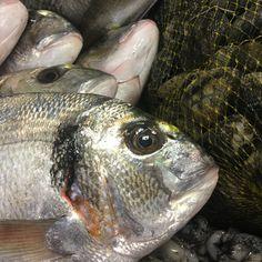 Pesce freschissimo al Mulino di Varazze