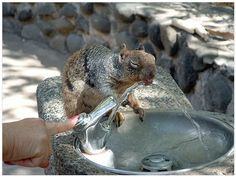 I'd share my water fountain with him/her!!!
