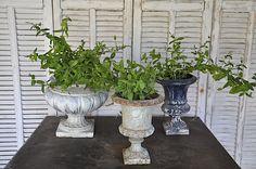 Mener une vie simple en Provence .          Un jour planter de la menthe.               Un jour se dire que l'on va se poser,juste se le d...