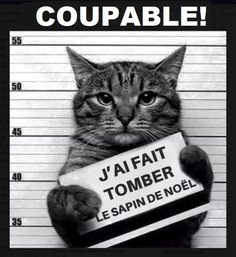 New meme compilation (cat memes,dog memes,pets memes,animal memes) Funny Animal Jokes, Funny Cat Memes, Cute Funny Animals, Animal Memes, Funny Cute, Cute Cats, Funny Happy, Super Funny, Hilarious