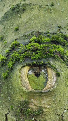 Trees really do have eyes by hasmodia