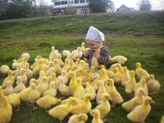 adorable baby surrounded with a bunch of cute ducklings