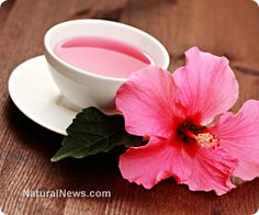"""Commonly referred to as """"sour drink"""" in Iran, #hibiscus is a refreshing #tea that also has been used worldwide as an effective medicinal beverage. Ellis Island Tropical Tea is ready-to-drink hibiscus tea made in Detroit, Michigan. http://www.ellisislandtea.com _hibiscus_herbal_tea_cardiovascular_health.html"""