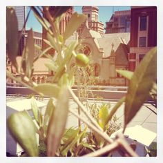 Olives on the roof at Federation Square #Joy
