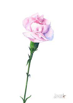 Carnations print of watercolor painting C12116 5 by LouiseDeMasi