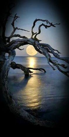 Foto: WONDERFUL MOON...