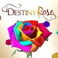 Destiny Rose November 16 2015