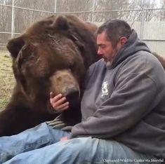 for more videos Big cuddly bear! Cute Funny Animals, Cute Baby Animals, Animals And Pets, Big Animals, Unusual Animals, Animals Beautiful, Beautiful People, Cute Animal Videos, Tier Fotos