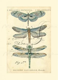 Dragonfly Ephemera I - inspiration only