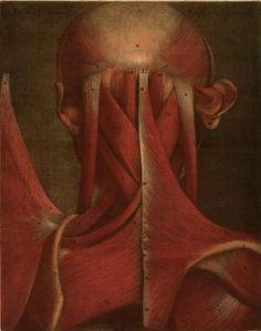 Jacques Fabien Gautier d'Agoty. Essai d'Anatomie,1754.