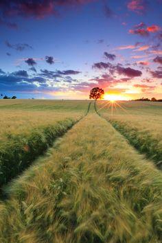 Field Sundown June14, Balticsea, by Niclas Hartz