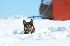 Sun Bathing :the Greenlandic Way by Nicole Cambré, via 500px