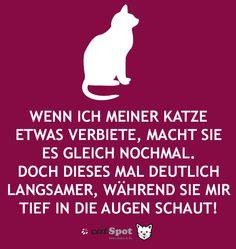 Katzen - Chronik-Fotos