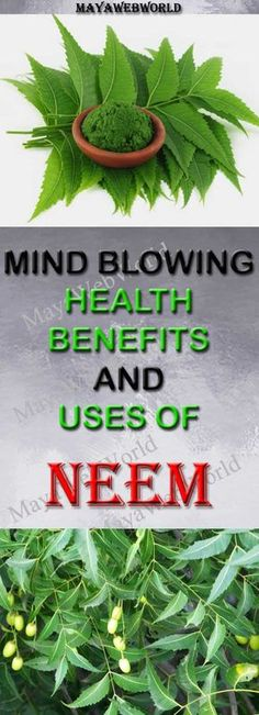 Mind Blowing Health Benefits and Uses of NEEM – MayaWebWorld