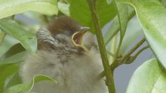 Spring is the season for Young Sparrow