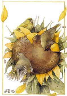 Gathered on a Sunflower By artist Marjolein Bastin. Botanical Illustration, Illustration Art, Decoupage, Marjolein Bastin, Nature Sketch, Images Vintage, Sunflower Art, Nature Artists, Dutch Artists