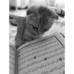 cat listening to the Quran Beautiful Quran Quotes, Quran Quotes Love, Islamic Love Quotes, Islamic Inspirational Quotes, Photo Coran, Kittens Cutest, Cute Cats, Cute Animal Quotes, Quran Wallpaper