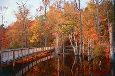 Newport News Park typical fall foliage by Fall In Virginia, via Flickr: