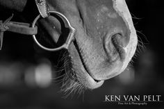 A horse tacked up standing outside a horse stable, equine photography by Ken Van Pelt of Ken Van Pelt Fine Art & Photography, providing all forms of equine photography such as riders, english, western, tack, stables and more. Other services such as family, pet, portrait & event photography available. Thanks for viewing my work to see more please visit www.kenvanpelt.com Family Pet Photography, Western Photography, Equine Photography, Event Photography, Animal Photography, Fine Art Photography, Horse Stables, Horse Tack, Mans Best Friend