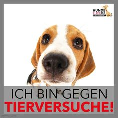 Ich bin gegen Tierversuche!