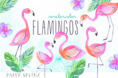 Flamants roses tropicales Clipart aquarelle | Tropical l'été des cliparts - main peint bébé flamants - téléchargement numérique télécharger les fichiers PNG