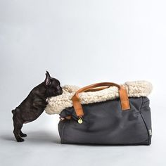 Carry your fluffy doggies in style and spoil them with luxury using this Dog Carrier by Cloud 7.