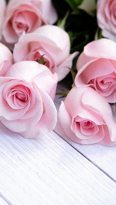 Pąki jasnoróżowych róż - Tapeta na telefon