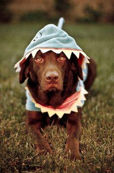 Looks like bailey... Maybe we'll dress her like a shark for Halloween