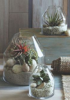 Roost Vida Terrariums Contemporary, angled terrariums crafted from thick glass. Found at Modish. www.modishstore.com  #green #eco-frirendly #inspired