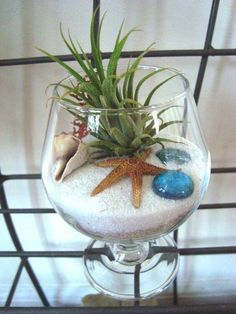 terrario em taça estrela do mar #terrarios
